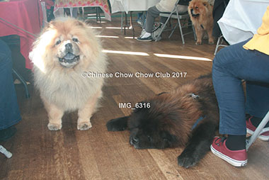 Chinese Chow Club